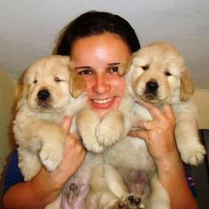 Filhotes de Golden Retriever - Pedigree