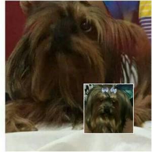 Cachorra roubada